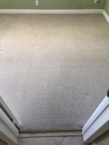 Freshly cleaned carpet | Champion Carpet Cleaning in Wellington, FL